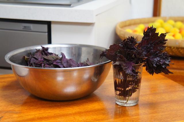 赤紫蘇|梅干し作り|画像