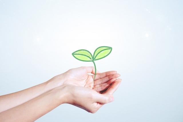 未来への種|希望|手のひら
